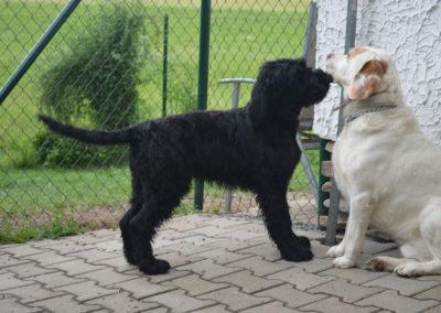 Chovní psi